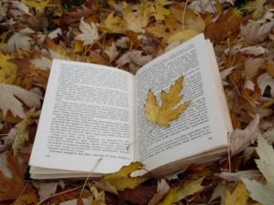 jesień 1